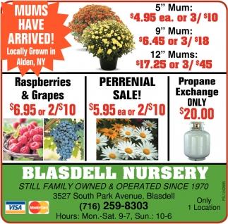 Still Family Owned And Operated Since 1970 Blasdell Nursery Buffalo Ny